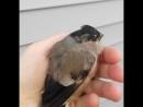 Спасли птичку