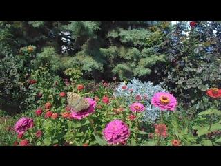 Любимовка 2.10 Цветочки и бабочки
