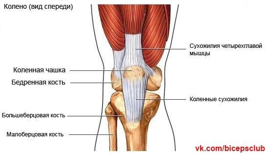 Боль в левом паху отдаёт в ногу