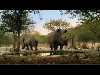 Африканское сафари 3D (African Safari 3D) 2013 Документальный Бельгия, США : Трейлер