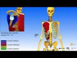 Краткий обзор тела человека в 3д