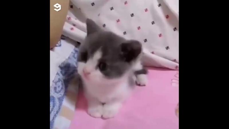 Кошки и котята двигаются под музыку
