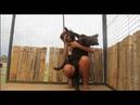 реакция пантеры когда она видит своего любимого смотрителя в zoo