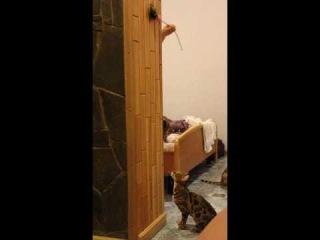 леопардовая кошка - прыжки. Питомник
