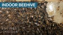 This Wall Mounted Glass Beehive Lets You Keep Bees Inside Your House