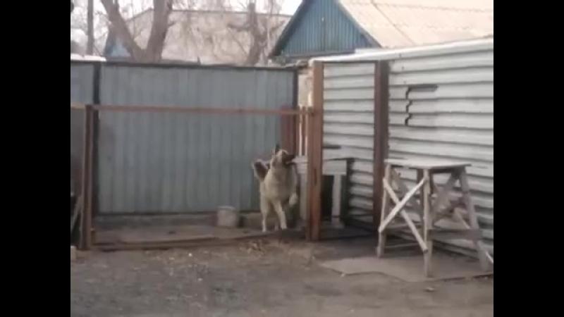 Собачка так отлично танцует