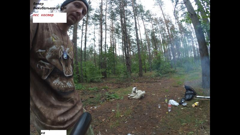 Forest siberian haski my films тушенка омкк Что делать если гроза в лесу