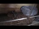 Крольчата гуляют в клетке .