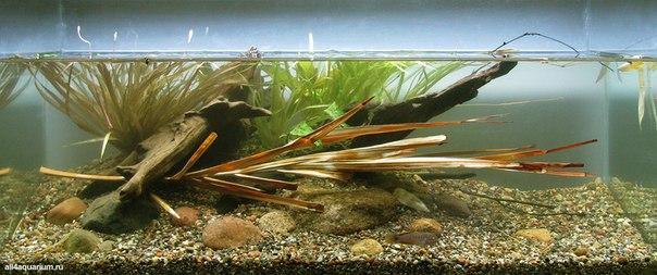 Конкурс дизайна биотопных аквариумов JBL 2014 Vf90Xk9e1eg
