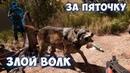 Far Cry 5 ☞ НАПАЛ ВОЛК БУДЬТЕ НАЧЕКУ ☞ Прохождение приколы фейлы