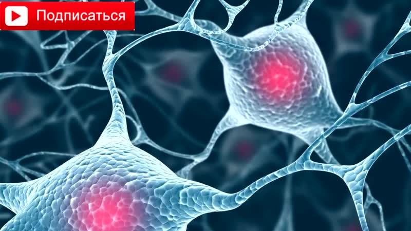 Необычные факты о нашем теле и мозге
