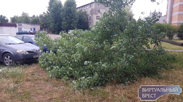На ул. Советской Конституции дерево рухнуло на автомобиль