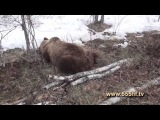 Весенняя Охота на медведя.