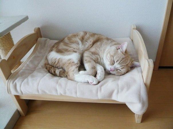 Владельцы котов по всей Японии, превращают кукольные кроватки IKEA в постельки для кошек