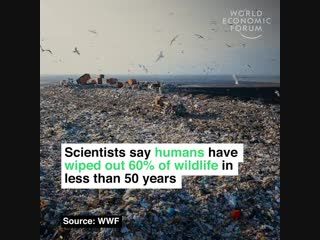 We've lost 60% of wildlife in less than 50 years