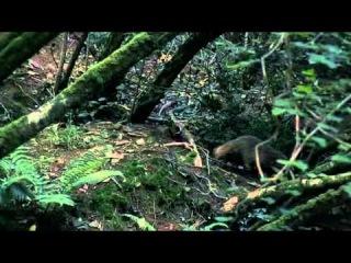 BBC Мир природы.Тайная жизнь барсуков