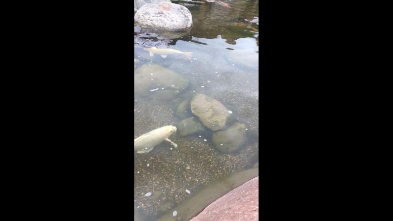 Рыбки в МЖК