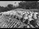 Холодная война Камбоджа Слабонервным не смотреть