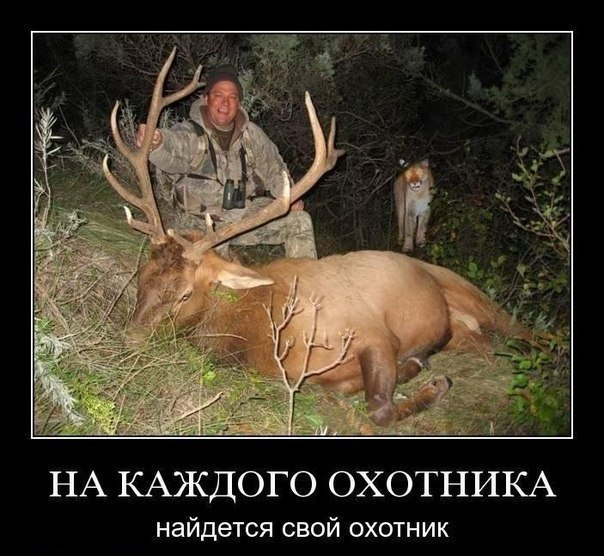 Удачной охоты каа цитаты