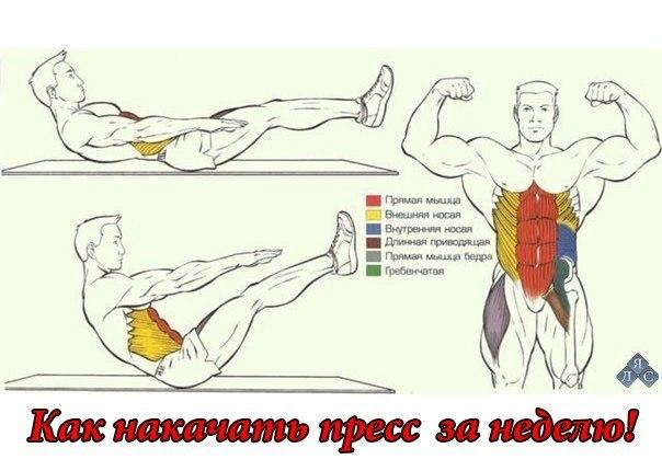 Качаю Мышцы Сам