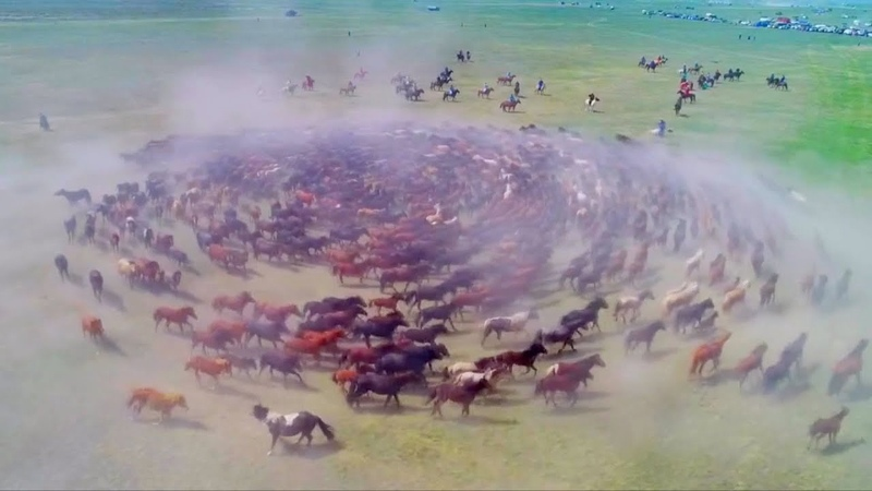 Spectacular drone footage Hundreds of horses spiraling at Naadam festival in China