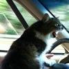 Gudred-Sw Mayskiy-Kot