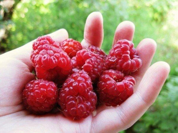 Чтобы в ягодах малины не было червей.