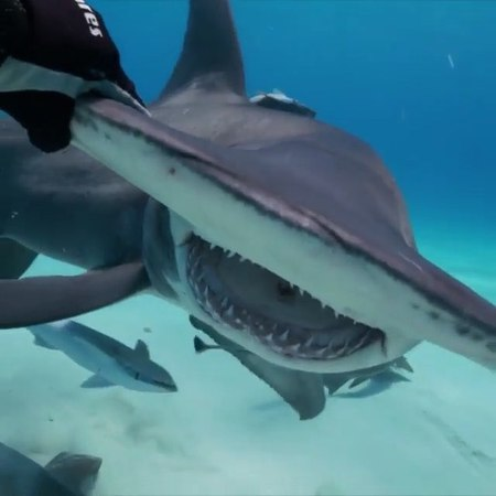 """DISCOVERSHARKS on Instagram """"By @michaelmuller7 At its heart INTOtheNOWVR is a personal journey of overcoming my FEAR of sharks by diving cage-fr..."""