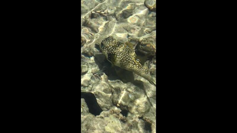 Рыба - карась