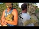 Прайд оставил умирать слабого львенка но люди нашли малышку