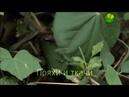 BBC Загадки природы Пряхи и ткачи