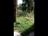 Samim Khan - Live