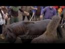 Исландия Дикая жизнь Документальный природа животные