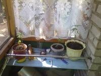 We-Smoking Ganja-Weed, 1 ноября 1994, Днепропетровск, id177471133