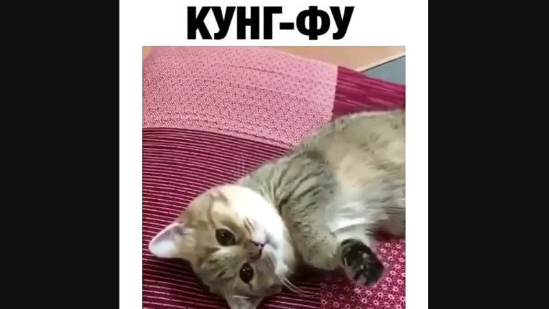 Кунг-фу котик