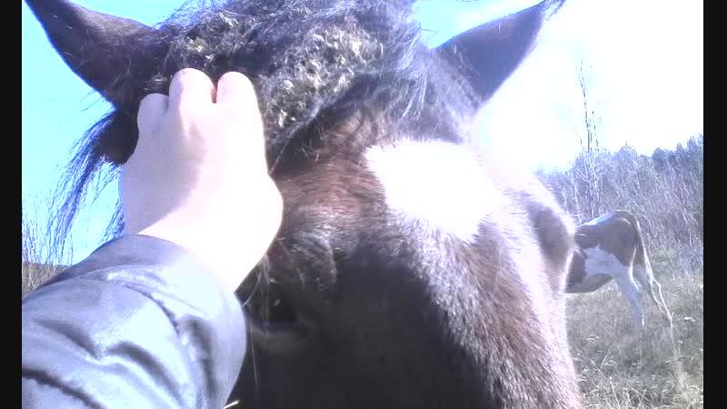 нашла коняшку Огонька!😍😍❤️🐎