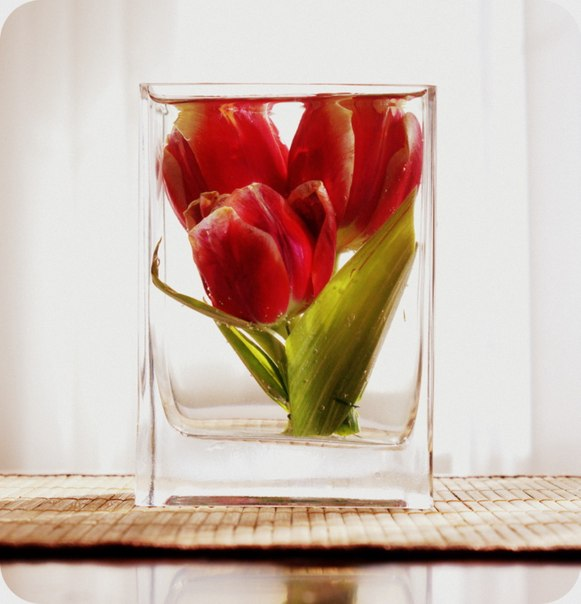 Цветы консервированные купить