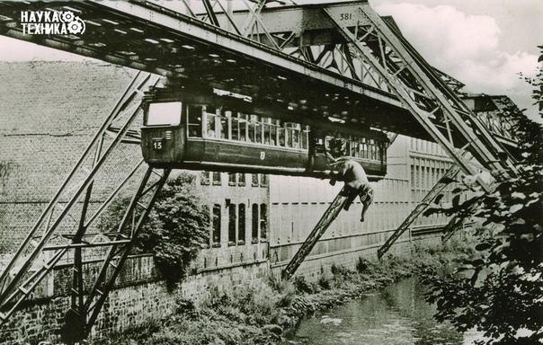 На фото слон, выпавший из вагона, Германия, 1950 год.