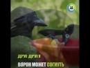 Самая умная птица