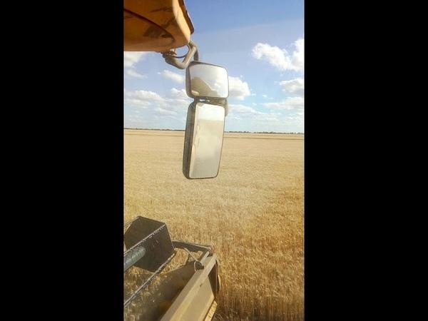 Уборка пшеницы 2018 Комбайн Нью Холонд Жатка-9метров