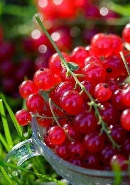 Червоні ягоди порічок