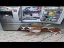 Video fb614fc4c8bdf325a8e97d601d308cb6