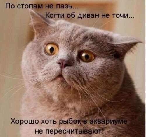 Кошачий юмор - Страница 8 J9hXEG94V9c
