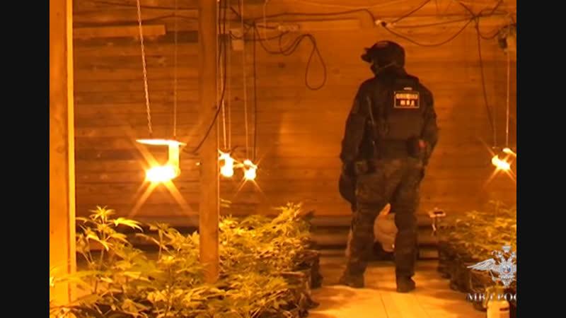 Плавучую плантацию конопли взяли на абордаж архангельские полицейские