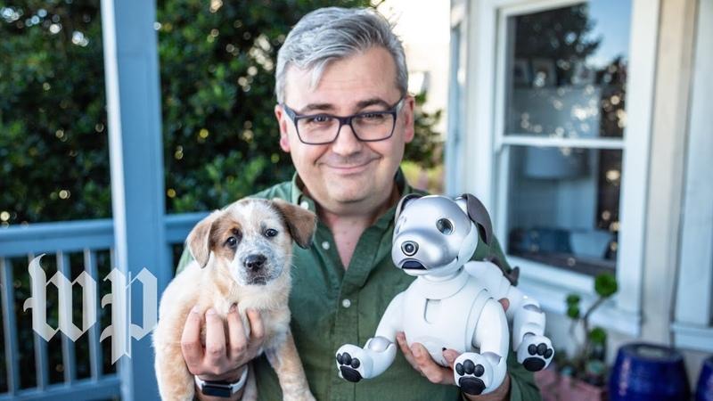 Sonys robot dog Aibo vs. a real puppy