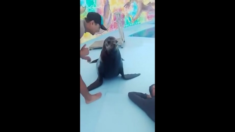 Seal Prank