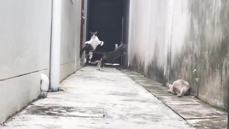 Кот-паркурщик