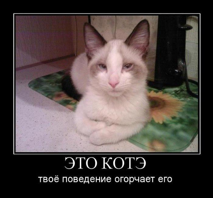 http://cs315423.userapi.com/v315423820/50c2/WfcVU7ARTog.jpg