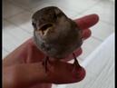 Little bird enjoys the singing of a girl Un pajarito disfruta el canto de una chica