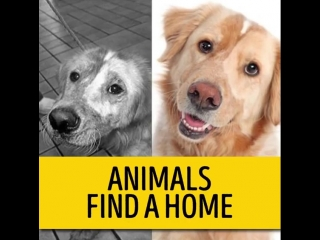 Dogs before/after adopting